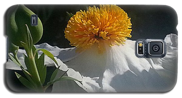 Fried Egg Poppies In The Air Galaxy S5 Case by Suzy Piatt