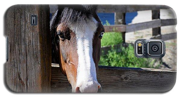 Friendly Horse Galaxy S5 Case