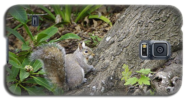 Galaxy S5 Case featuring the photograph Friendly Squirrel by Marilyn Wilson