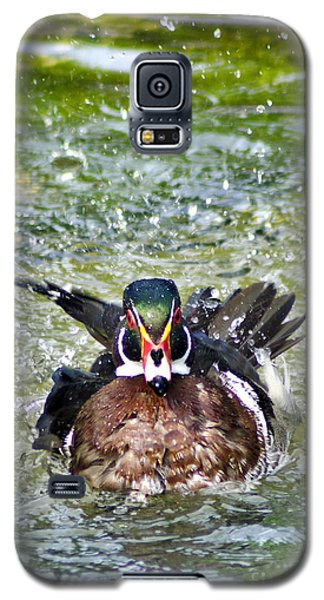 Frisky - Wood Duck Galaxy S5 Case by Adam Olsen