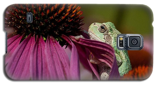 Frog And His Cone Galaxy S5 Case