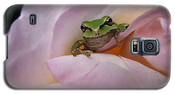 Galaxy S5 Case featuring the photograph Frog And Rose Photo 1 by Cheryl Hoyle