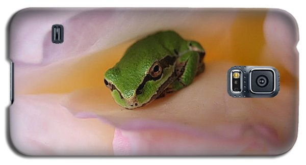Galaxy S5 Case featuring the photograph Frog And Rose Photo 2 by Cheryl Hoyle