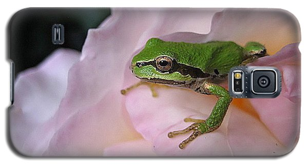 Galaxy S5 Case featuring the photograph Frog And Rose Photo 3 by Cheryl Hoyle