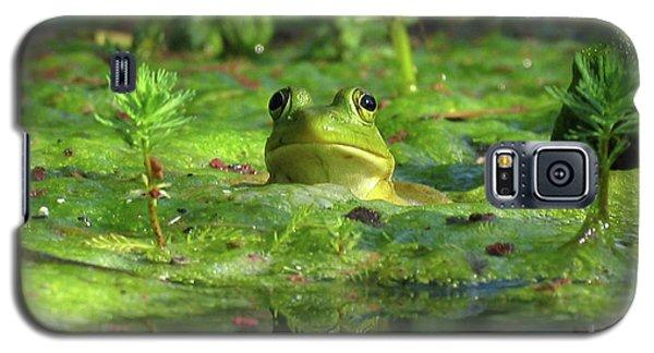 Frog Galaxy S5 Case by Douglas Stucky