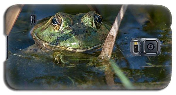 Frog Eyes Galaxy S5 Case