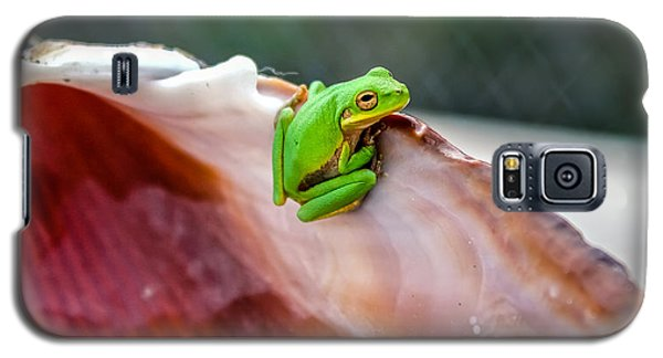 Frog In A Cockle Galaxy S5 Case by Rob Sellers
