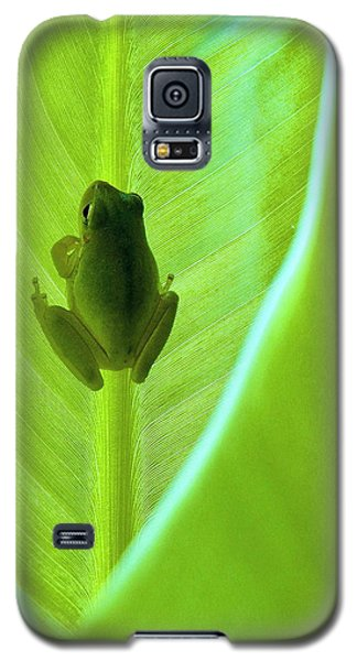 Galaxy S5 Case featuring the photograph Frog In Blankie by Faith Williams