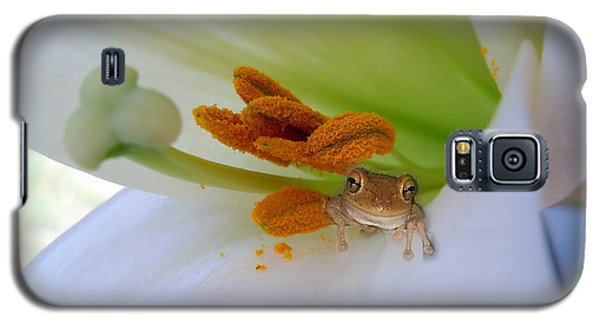 Frog In The Lily Galaxy S5 Case