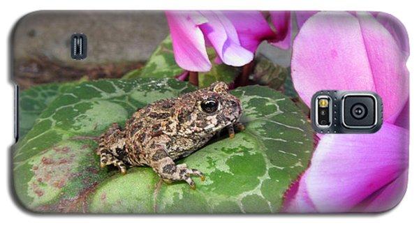 Frog On Cyclamen Plant Galaxy S5 Case
