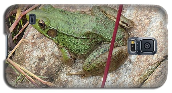 Galaxy S5 Case featuring the photograph Frog by Robert Nickologianis