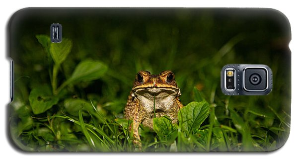Galaxy S5 Case featuring the photograph Frog Stare by Mike Lee