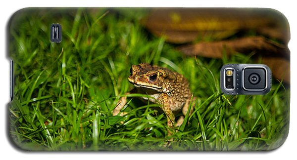 Galaxy S5 Case featuring the photograph Froggie by Mike Lee