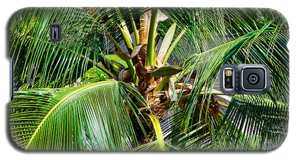 Fronds And Center Galaxy S5 Case