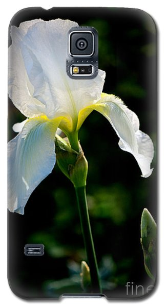 Front Yard Iris Galaxy S5 Case by Vinnie Oakes