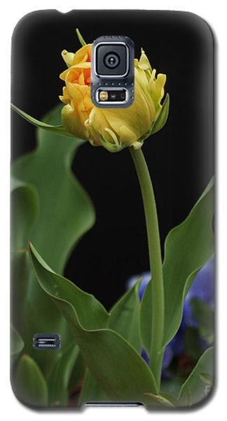 Galaxy S5 Case featuring the photograph Front Yard Tulip by Robert Pilkington