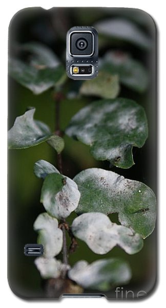 Galaxy S5 Case featuring the photograph Frost Coloured Leaves by Amanda Holmes Tzafrir