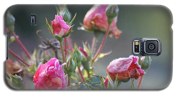 Frost Kissed Roses Galaxy S5 Case by Katie Wing Vigil