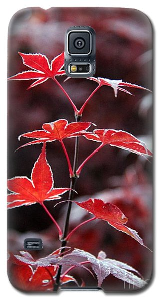 Frost  Galaxy S5 Case by Yumi Johnson