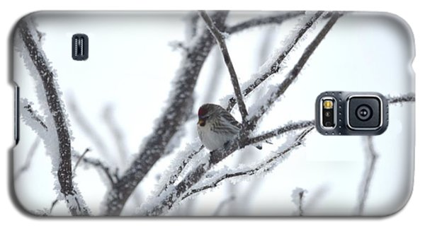 Galaxy S5 Case featuring the photograph Frosted Branches by Dacia Doroff
