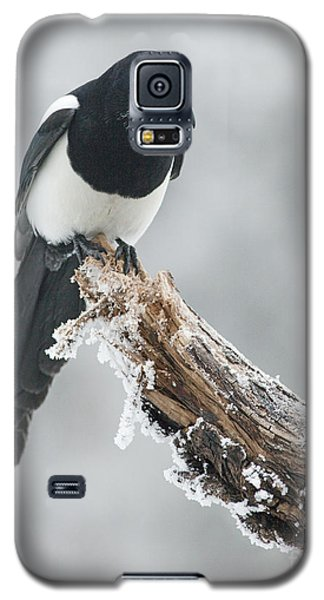 Frosted Magpie Galaxy S5 Case by Tim Grams