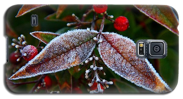 Frosted Nandina Leaves Galaxy S5 Case by Kathryn Meyer