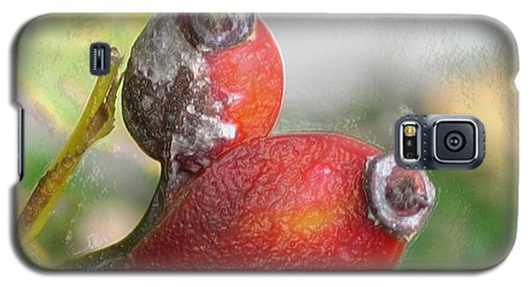 Galaxy S5 Case featuring the photograph Frosted Rosehips by Nina Silver