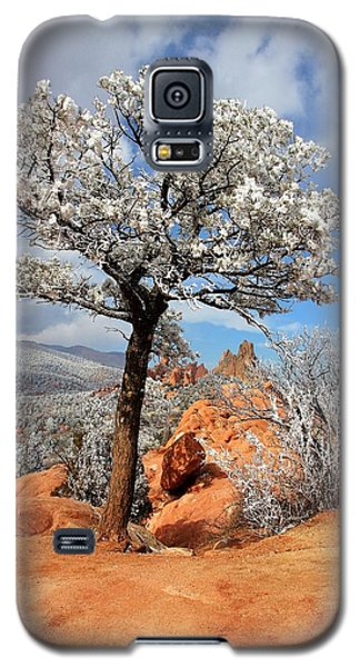 Frosted Wonderland 3 Galaxy S5 Case