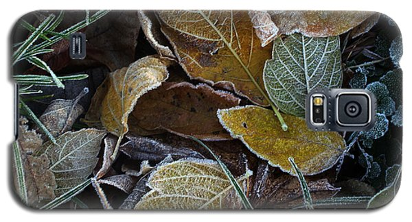 Frosty Autumn Leaves Galaxy S5 Case by Ellen Tully