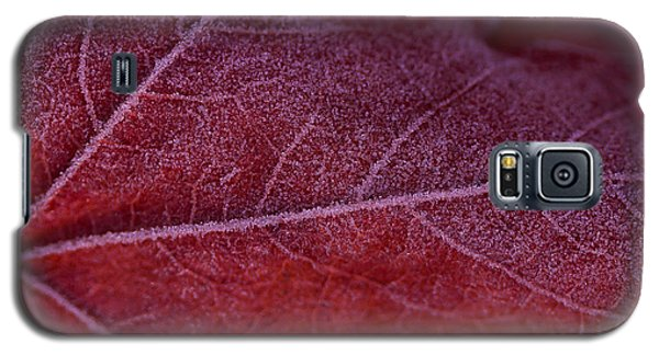 Frosty Leaf Galaxy S5 Case by Haren Images- Kriss Haren