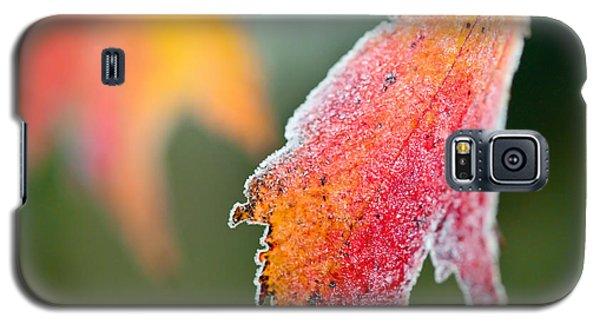 Frosty Leaf Galaxy S5 Case