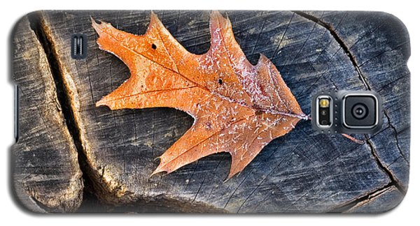 Galaxy S5 Case featuring the photograph Frosty Leaf On Tree Trunk by Gary Slawsky