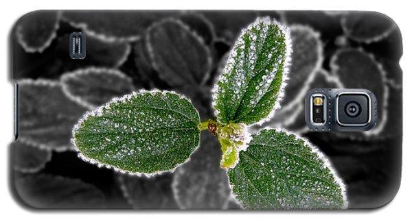 Frosty Leaves Galaxy S5 Case