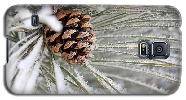Frosty Norway Pine Galaxy S5 Case by Penny Meyers