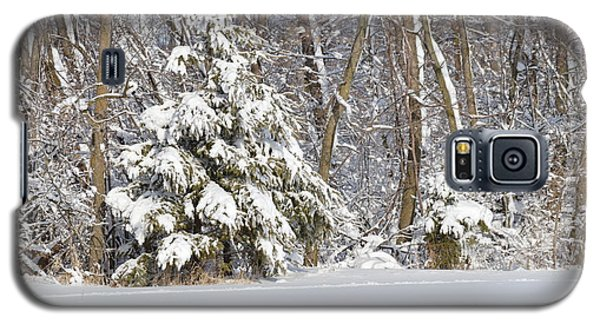 Galaxy S5 Case featuring the photograph Frosty Pine by Dacia Doroff