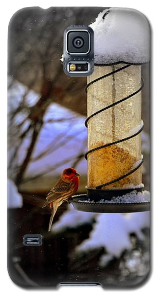 Frozen Feeder And Disappointment Galaxy S5 Case