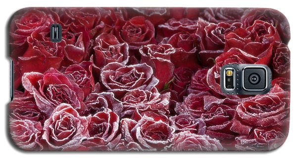 Frozen Tipped Red Roses Galaxy S5 Case