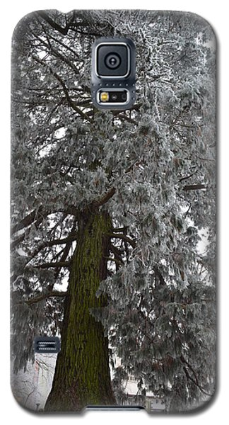 Galaxy S5 Case featuring the photograph Frozen Tree 2 by Felicia Tica