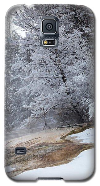 Frozen Tree Galaxy S5 Case