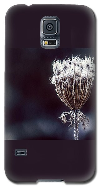 Galaxy S5 Case featuring the photograph Frozen Wisps by Melanie Lankford Photography