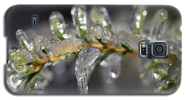 Frozen Yew Galaxy S5 Case