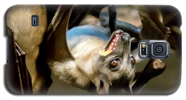 Fruit Bat Fedding Time Galaxy S5 Case