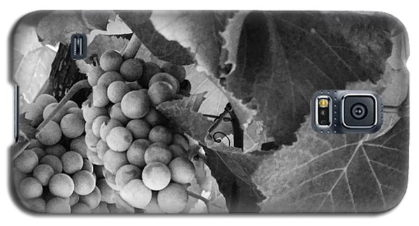 Fruit -grapes In Black And White - Luther Fine Art Galaxy S5 Case