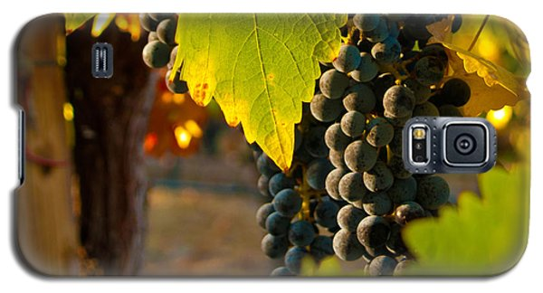 Fruit Of The Vine Galaxy S5 Case by Bill Gallagher