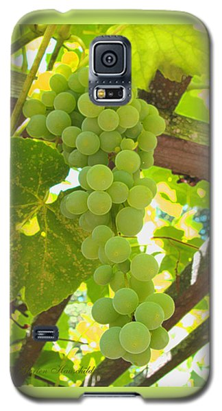 Fruit Of The Vine - Garden Art For The Kitchen Galaxy S5 Case