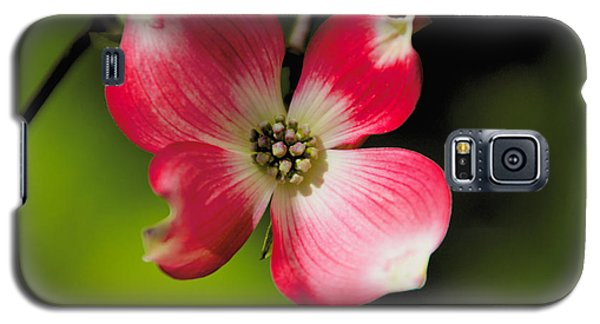 Fruit Tree Flower Galaxy S5 Case