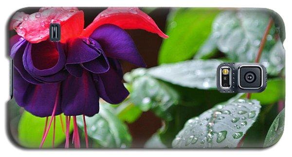 Fuchsia After Rain Galaxy S5 Case