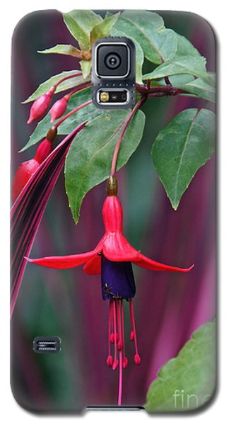 Fuchsia Delight Galaxy S5 Case by Byron Varvarigos