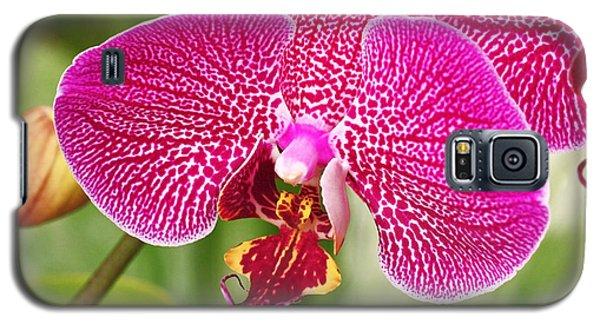 Fuchsia Moth Orchid Galaxy S5 Case by Rona Black