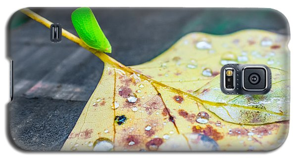 Galaxy S5 Case featuring the photograph Fulgoroidea On A Leaf by Rob Sellers